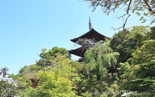 當麻寺中之坊から見る當麻寺東塔