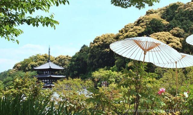 奈良の當麻寺