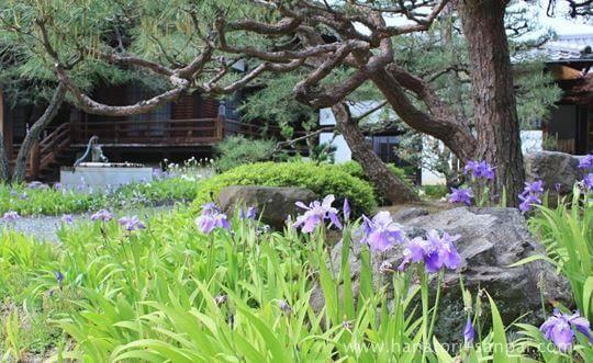 得淨明院の庭