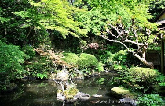 長楽寺の庭