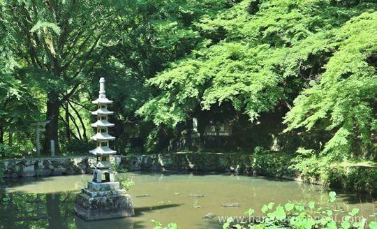 延命寺の蓮池