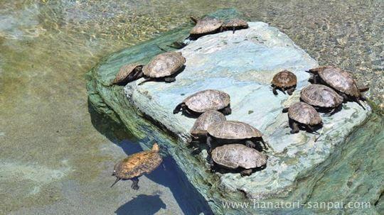 総持寺の亀の池