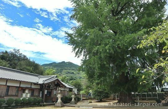 丹生酒殿神社の拝殿とイチョウ