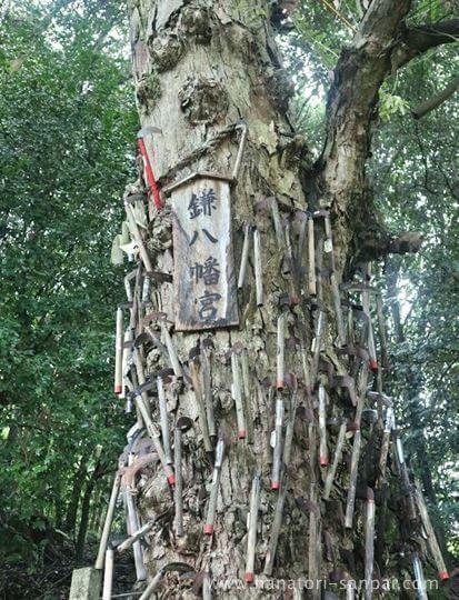 丹生酒殿神社の鎌八幡の御神木