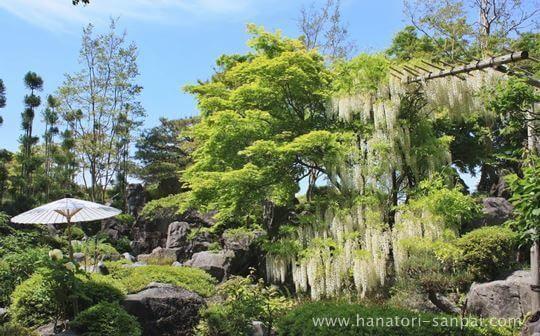 當麻寺奥院浄土庭園の藤棚