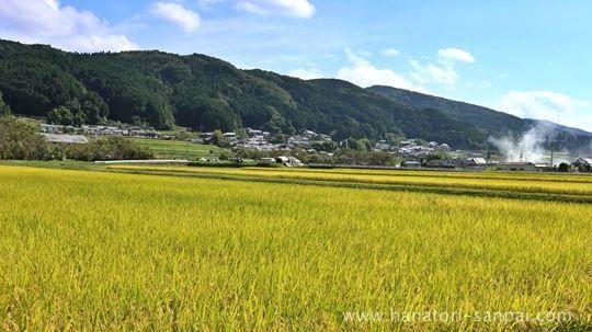 大柳生の田園風景