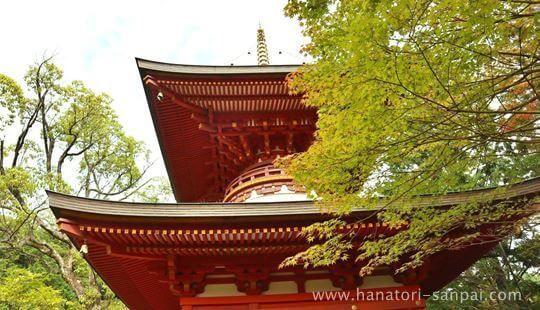 円成寺の多宝塔