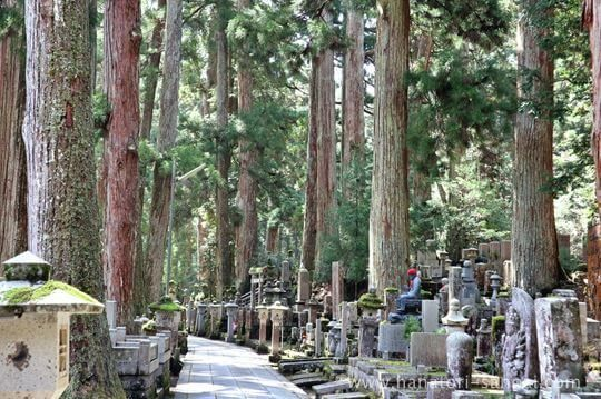 高野山奥之院の参道