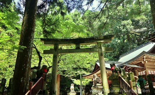 等彌神社の青紅葉
