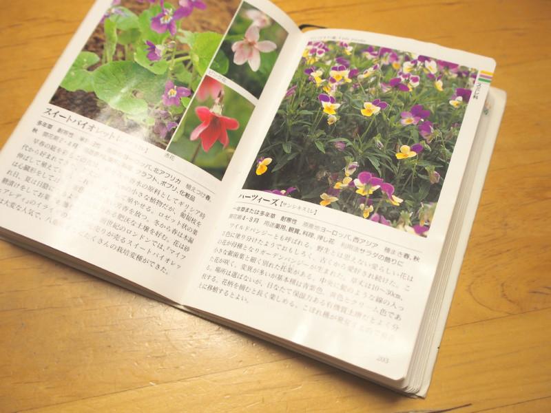 f:id:hanatsutimizu:20171004210345j:plain