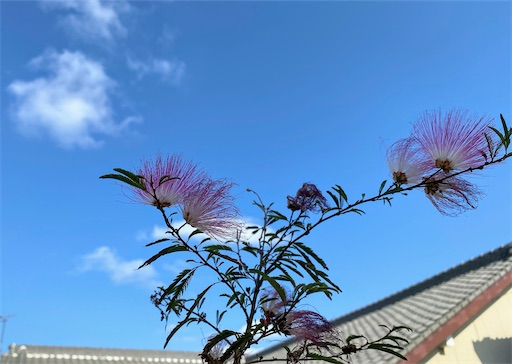 f:id:hanautabiyori:20210407162051j:image