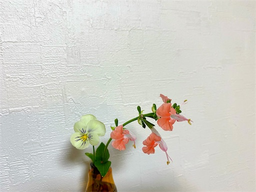 f:id:hanautabiyori:20210512095117j:image