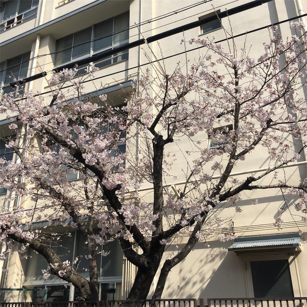 f:id:hanayasu:20170405174944j:image