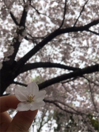 f:id:hanayasu:20170410124008j:image