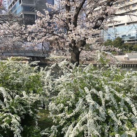 f:id:hanayasu:20180326114112p:plain