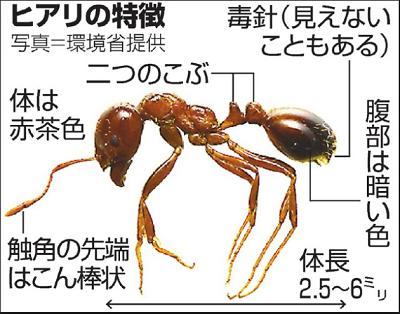 f:id:hanayasu:20180627125637p:plain