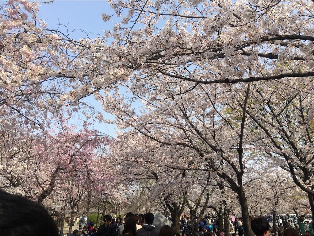 f:id:hanayasu:20190407114022j:image