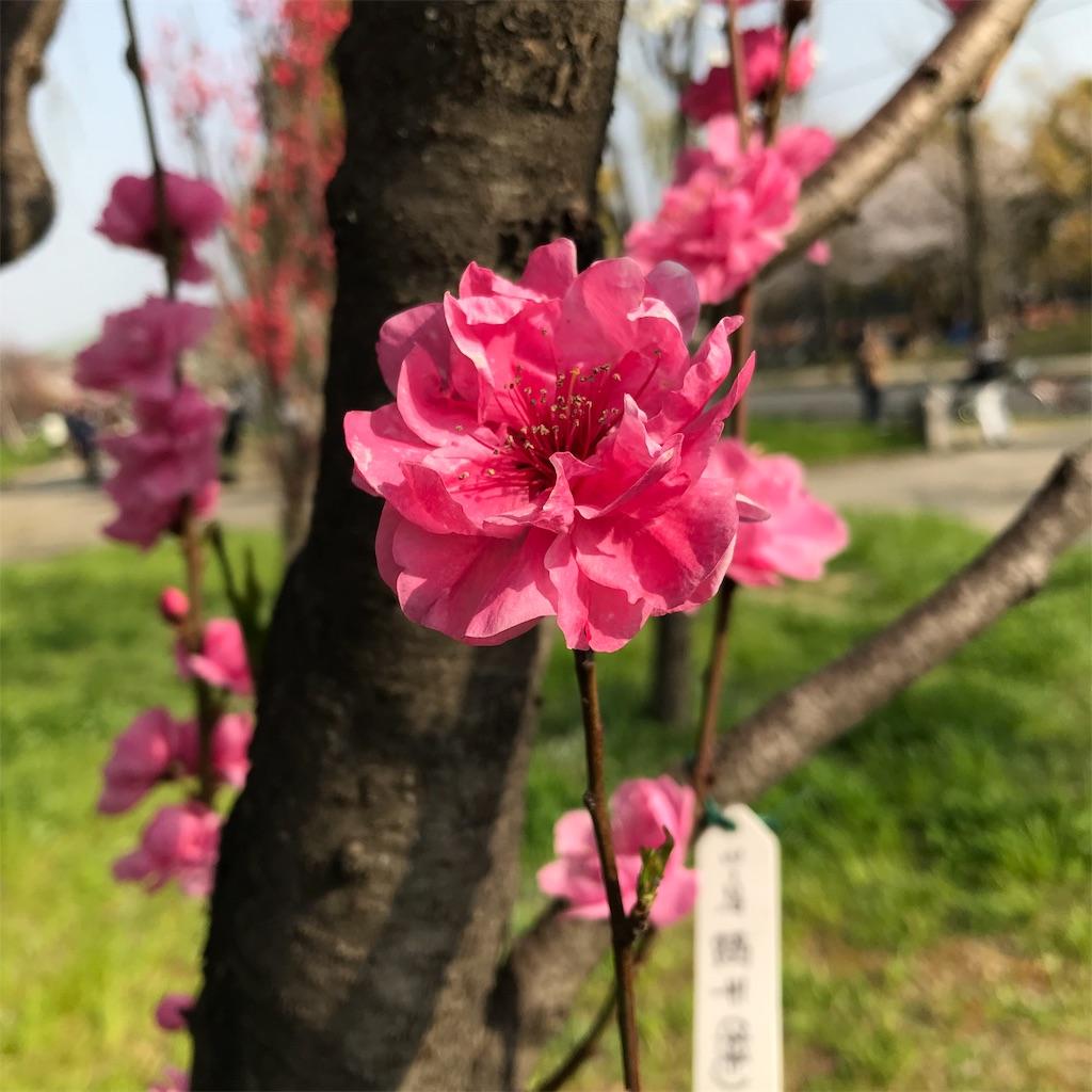 f:id:hanayasu:20190407132842j:image