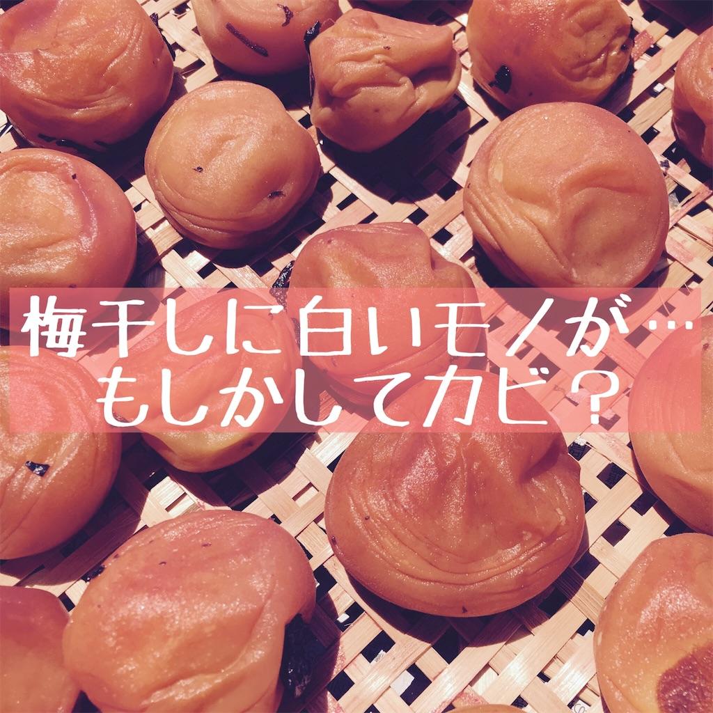 f:id:hanayasu:20200123123936j:image