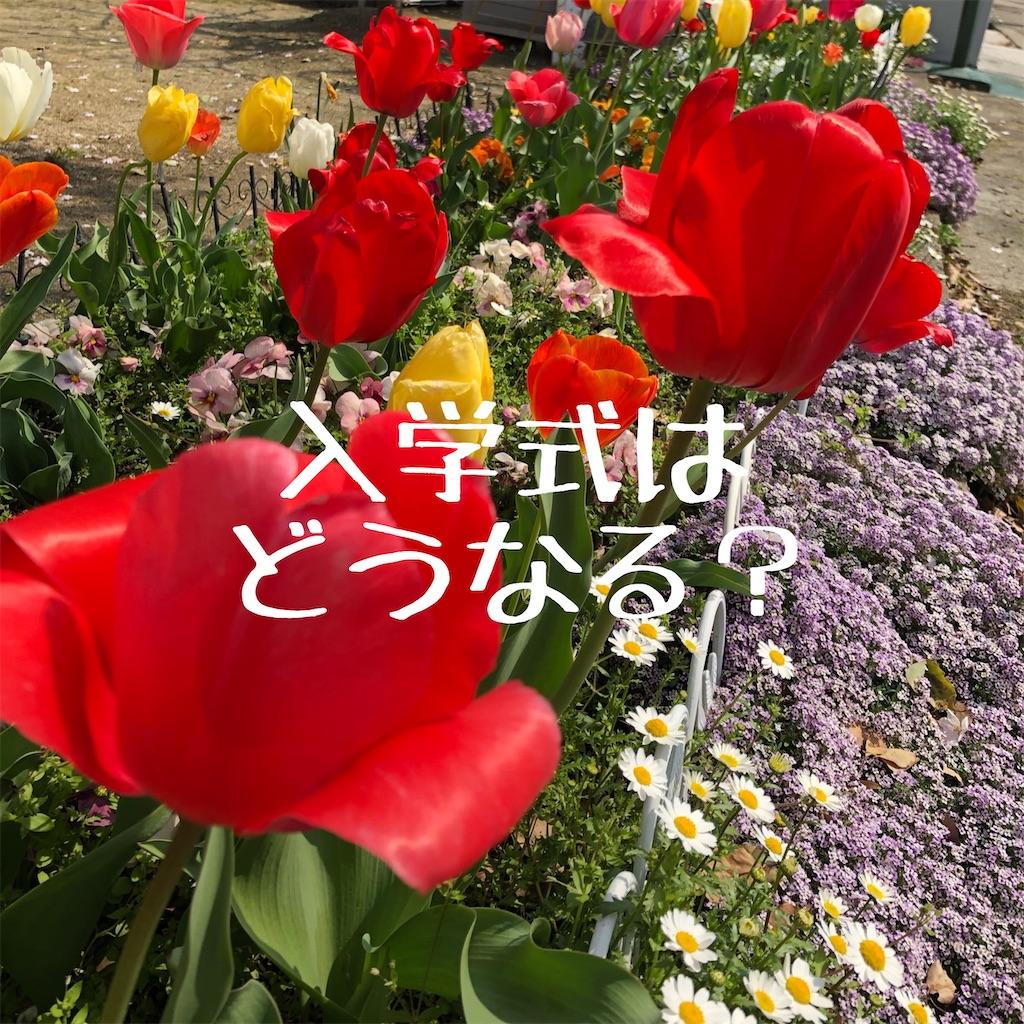 f:id:hanayasu:20200403190123j:image