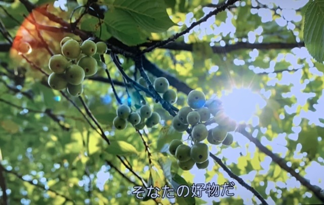 f:id:hanbaiin875:20210223153521j:plain
