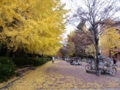 f:id:handai-carp:20111211193923j:image:medium