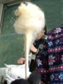 f:id:handai-carp:20111216201147p:image:medium