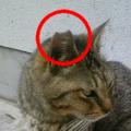 f:id:handai-carp:20120816164043p:image:medium