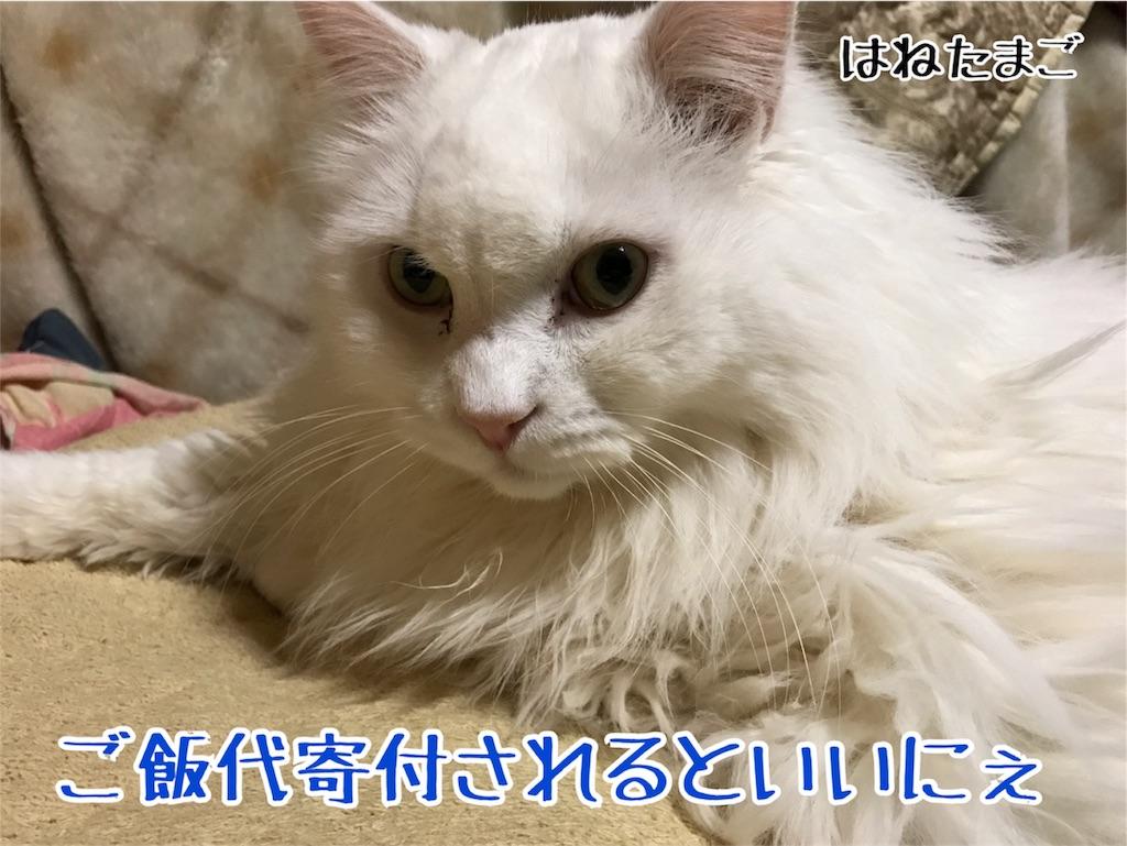 f:id:hanetamago:20170307002841j:image