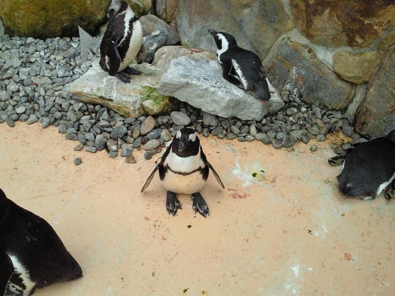 アドベンチャーワールド:ペンギン