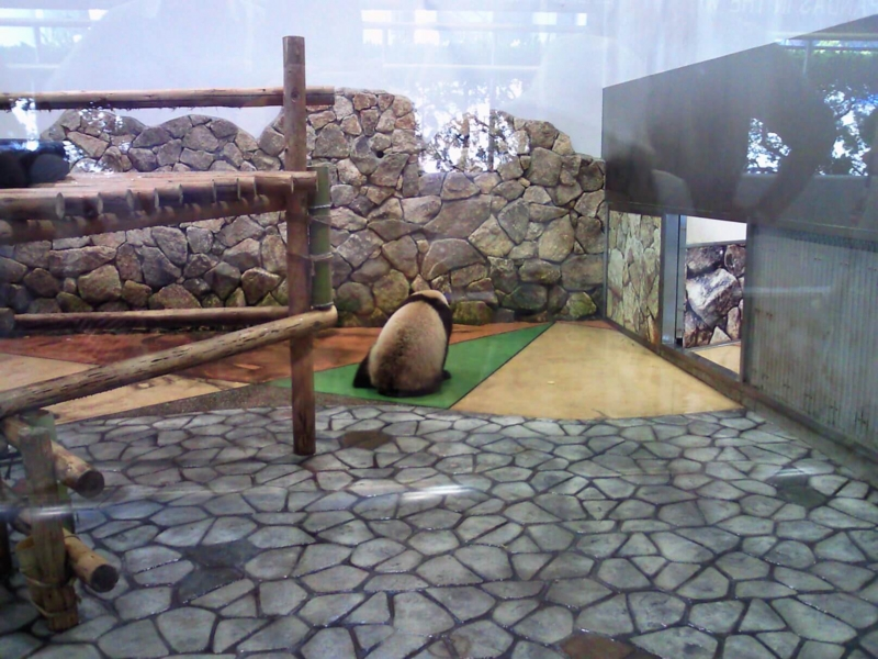 アドベンチャーワールド:パンダ隠しどり