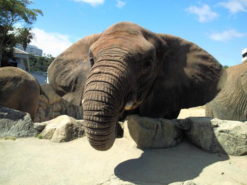 アドベンチャーワールド:ゾウ