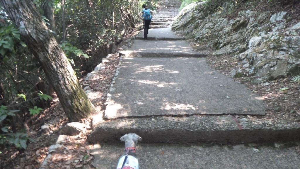 ペット連れで金華山に挑戦