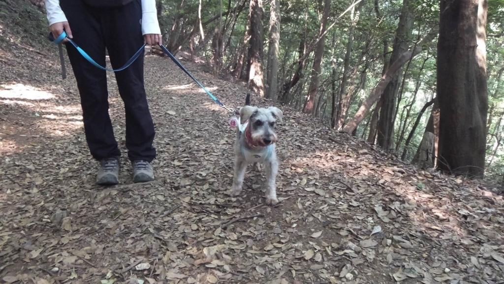 ペットと金華山ハイキング