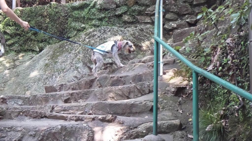 ペットも登れる金華山