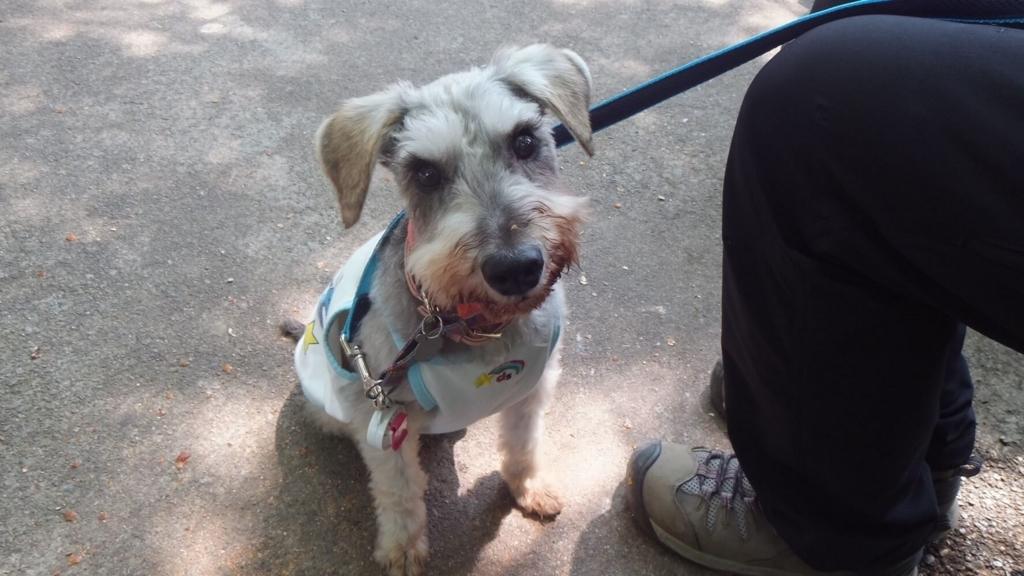 金華山:岐阜でペットと遊ぶ