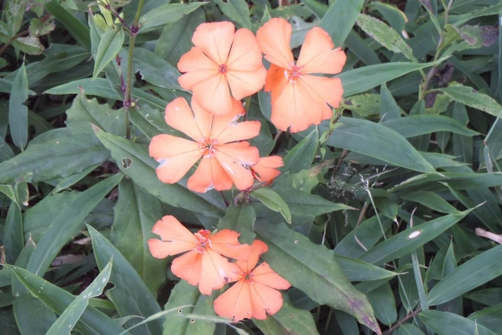 御所平の花畑2