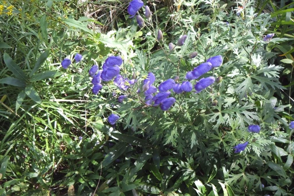 御所平の花畑3