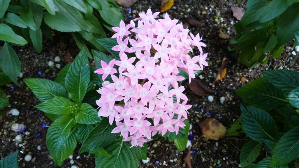 ノリタケの森:花1