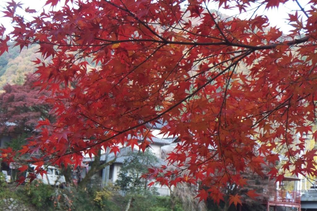 香嵐渓:紅葉シーズン