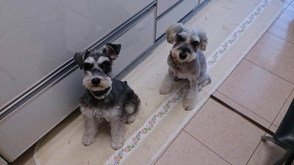 犬の十戒:ペットの心