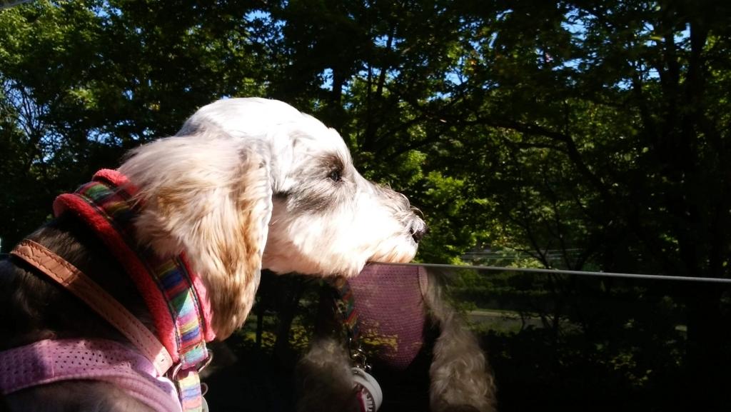 犬の十戒:ペットの躾