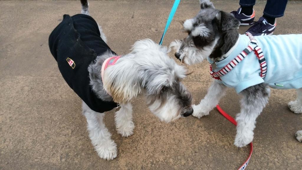 犬の十戒:ペットに話しかける