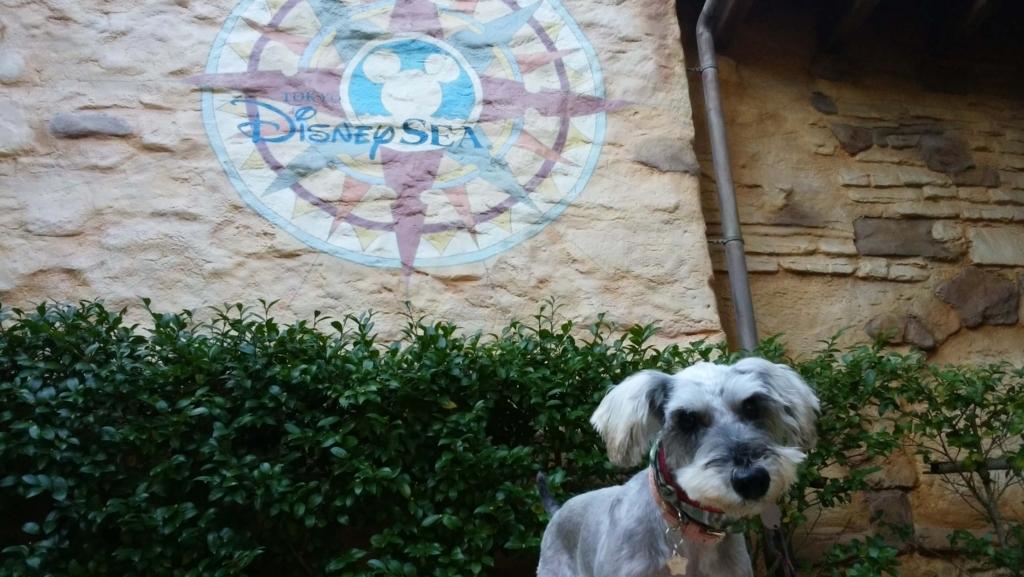 犬の十戒:年を重ねても仲良く暮らす