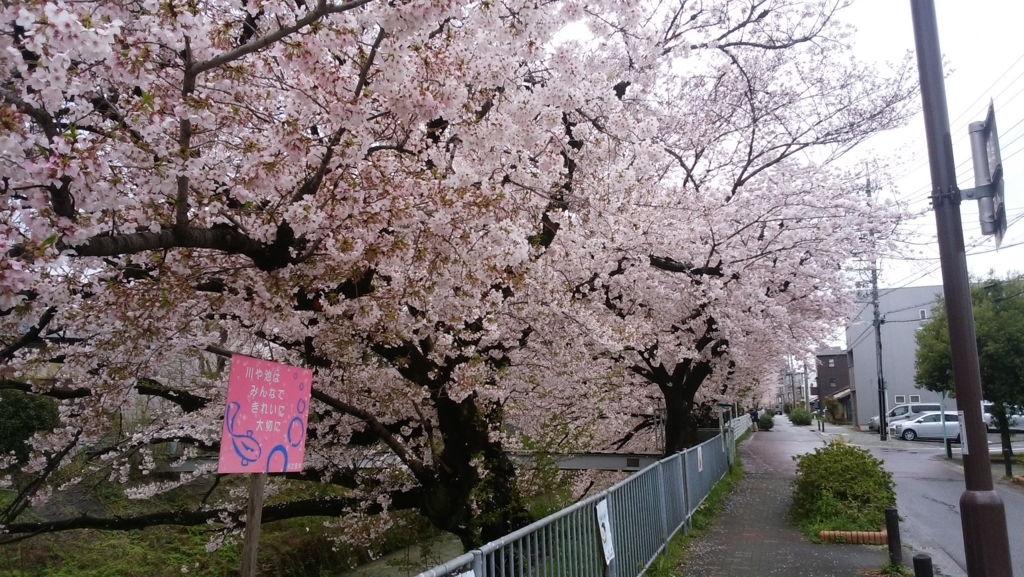 愛知県内でペットと遊ぶ:黒川の桜まつり
