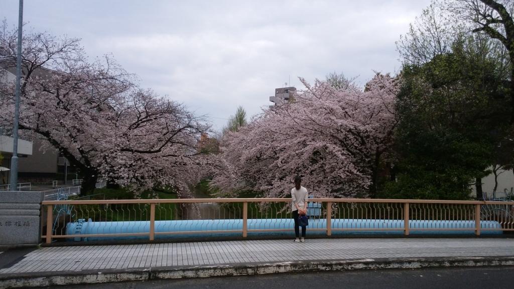 愛知県内でペットと遊ぶ:黒川の桜並木