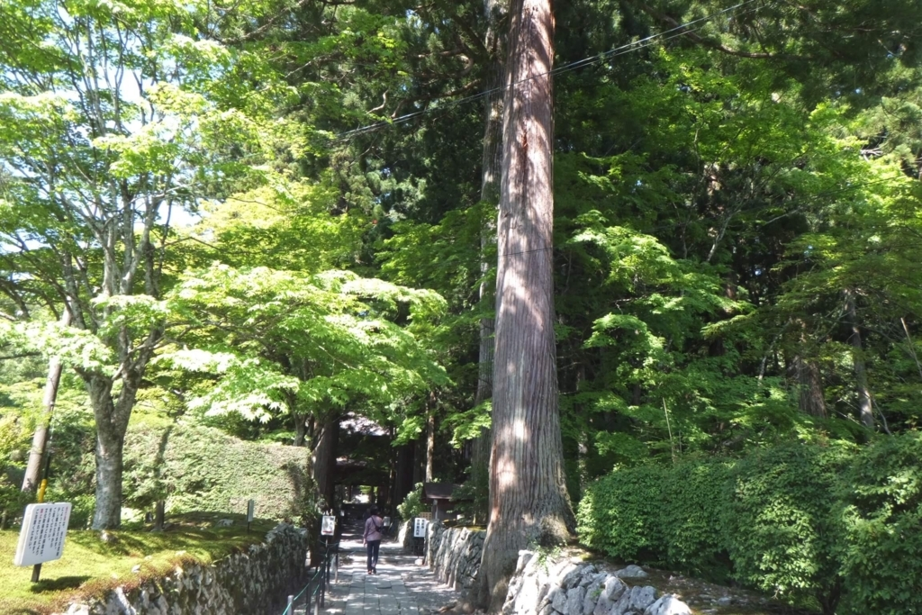 長野県駒ケ根市:光前寺とリンちゃんの木