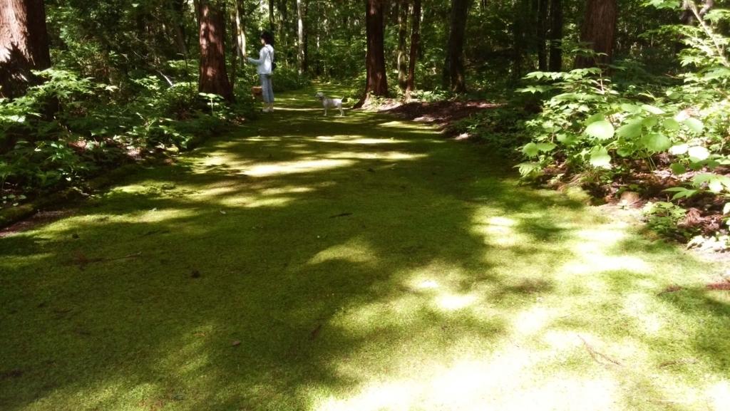 安曇野:烏川渓谷緑地 森林エリア