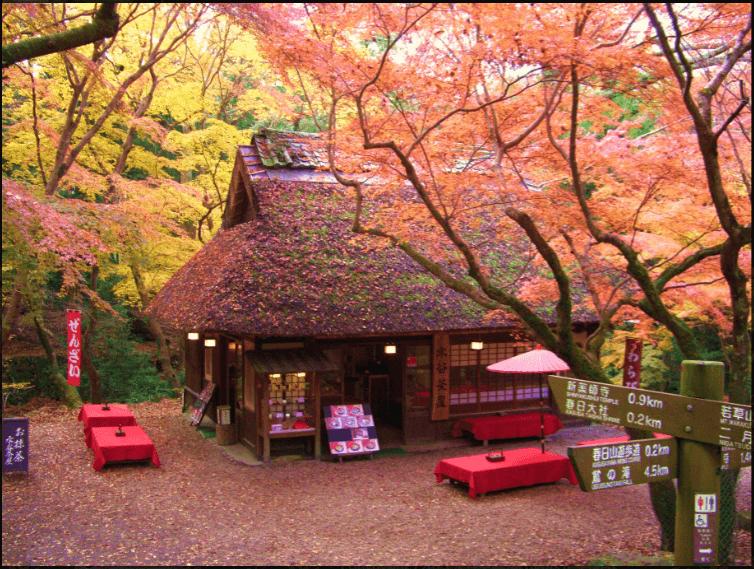 ペットと遊ぶ:奈良県 水谷茶屋