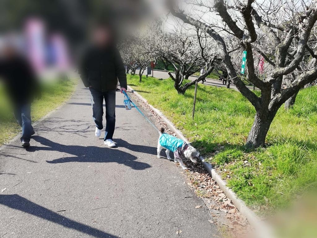 ペットと遊ぶ:佐布里池梅まつり ペットは散歩に夢中